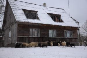 Kardons farm accommodation