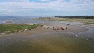 Holma beach